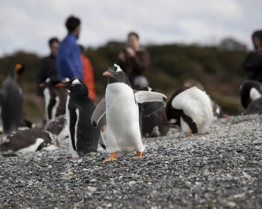 Penguin navigation with trekking